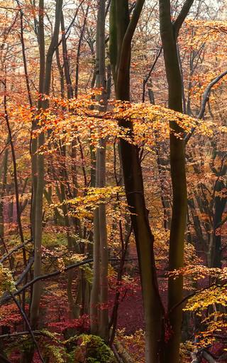 唯美树木高清手机壁纸