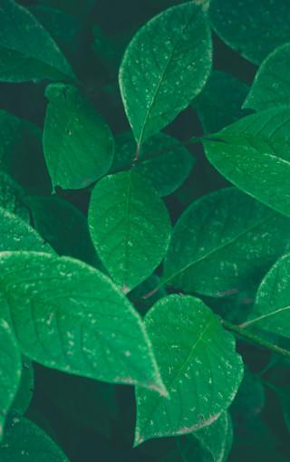 简约唯美植物手机壁纸