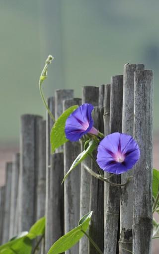 简约植物唯美手机壁纸