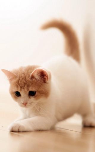 可爱小猫手机大图壁纸-zol手机壁纸