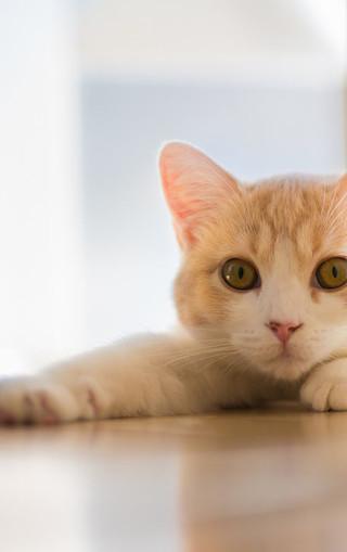 可爱小猫手机大图壁纸