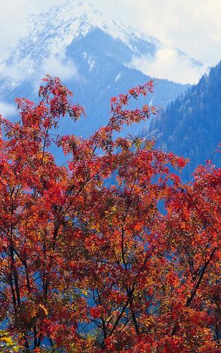 风景壁纸 自然风景壁纸 秋天的红叶美景手机壁纸   (18/21)