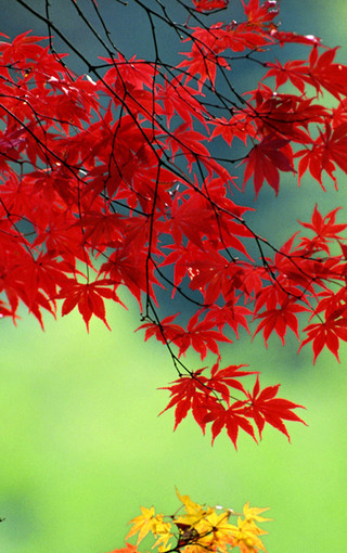 风景壁纸 自然风景壁纸 秋天的红叶美景手机壁纸   1/21 2/21 3/21 4