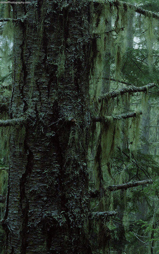 千姿百态的树木手机壁纸
