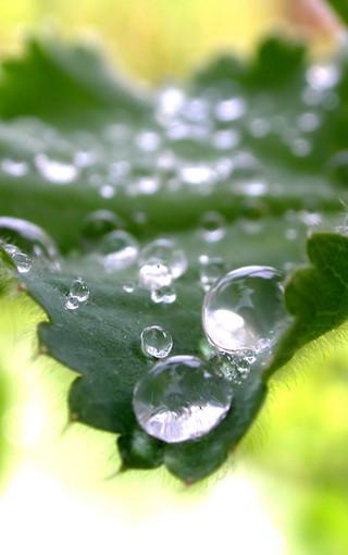 護眼綠色植物手機壁紙
