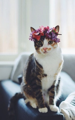 可爱萌猫手机壁纸
