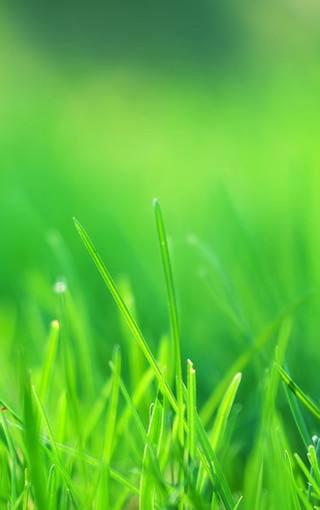 綠色植物手機壁紙