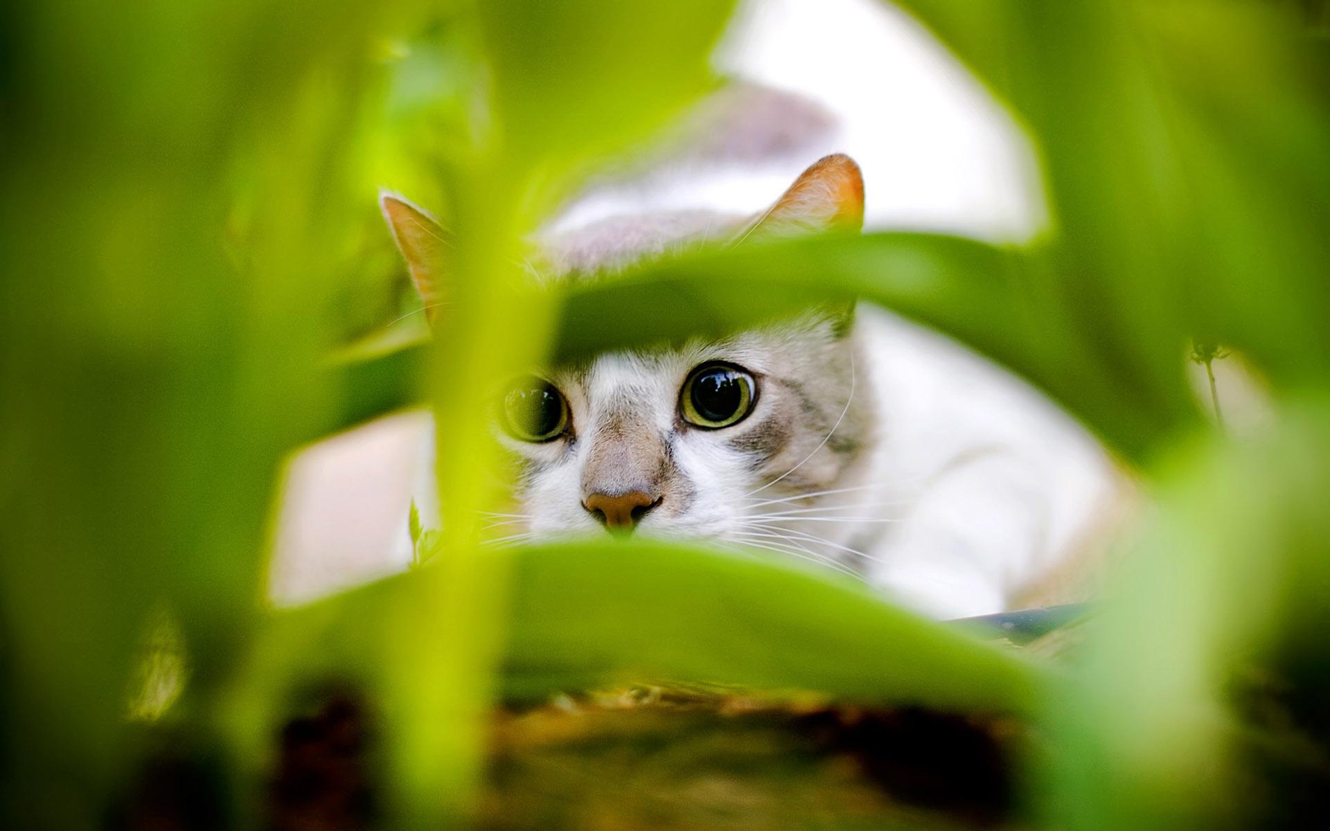 可爱小猫系列宽屏壁纸 第一辑