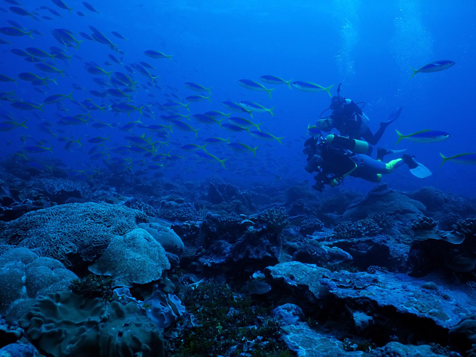 软件下载 桌面壁纸 风景壁纸 海底世界 鱼类写真壁纸 应用截图