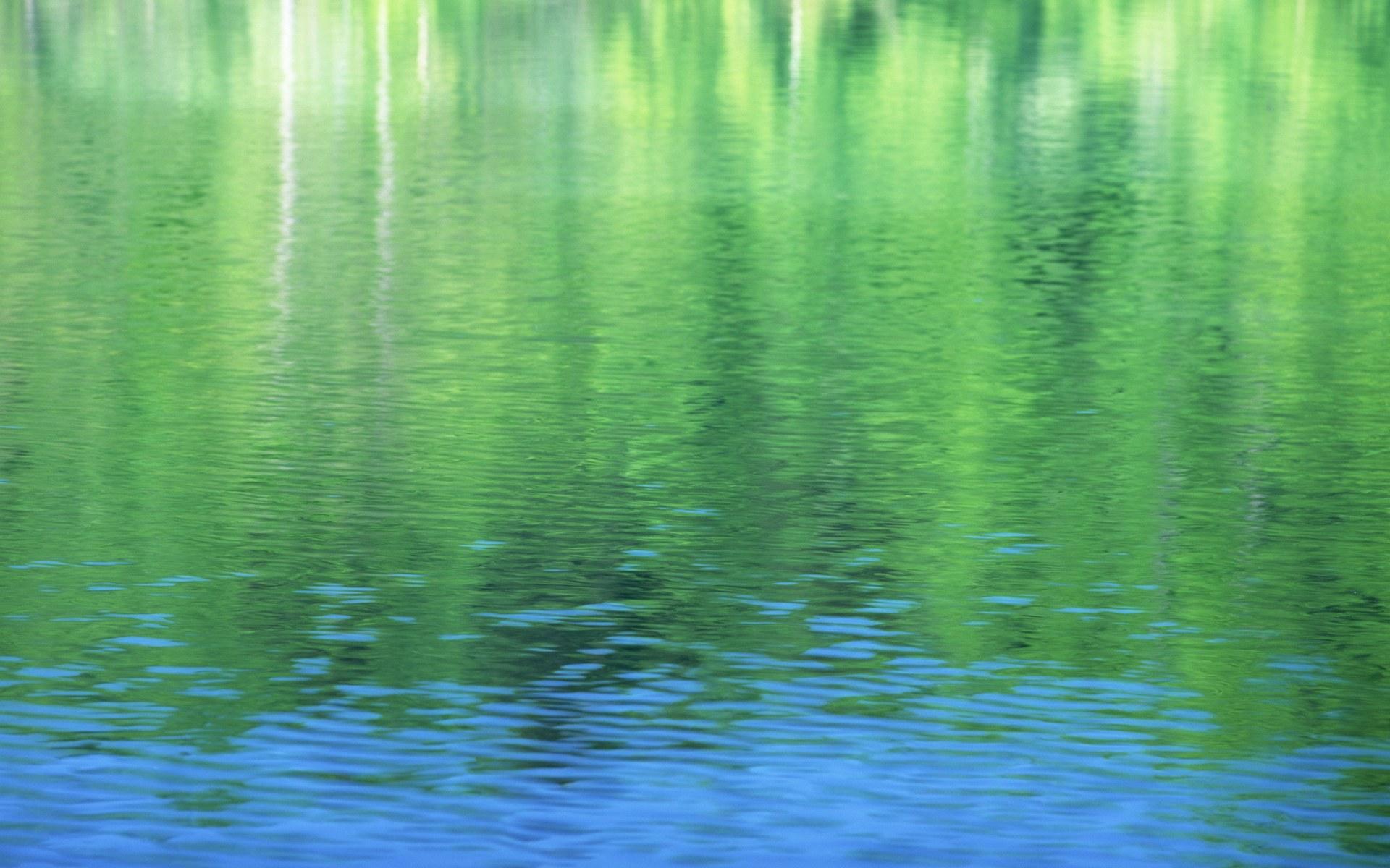 綠色的養眼壁紙(高清)