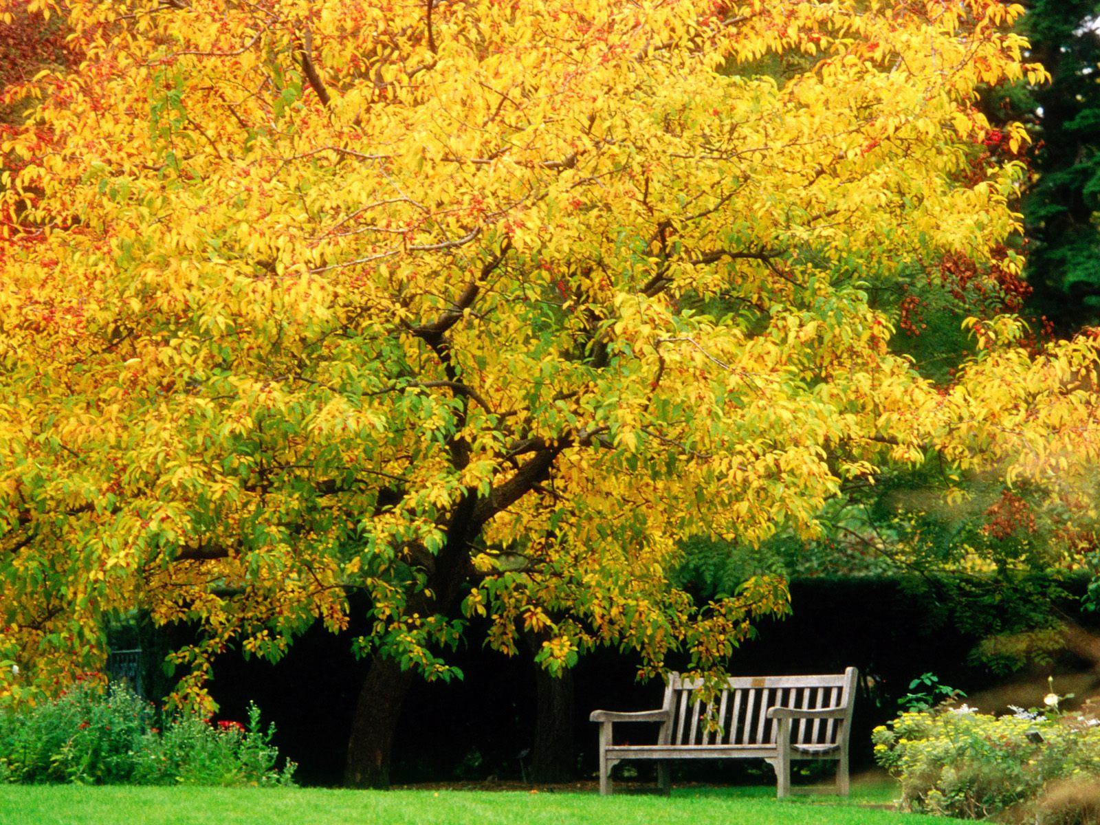 四季无限美 秋天风景精美特壁纸
