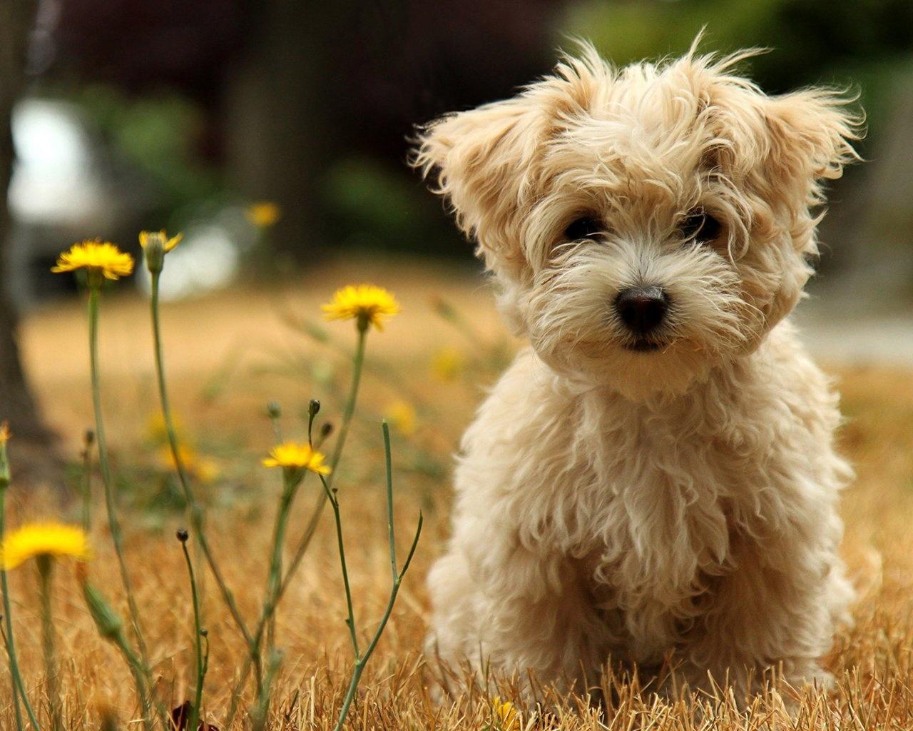 软件下载 桌面壁纸 17寸壁纸 户外玩耍的宠物狗狗壁纸 应用截图  可用