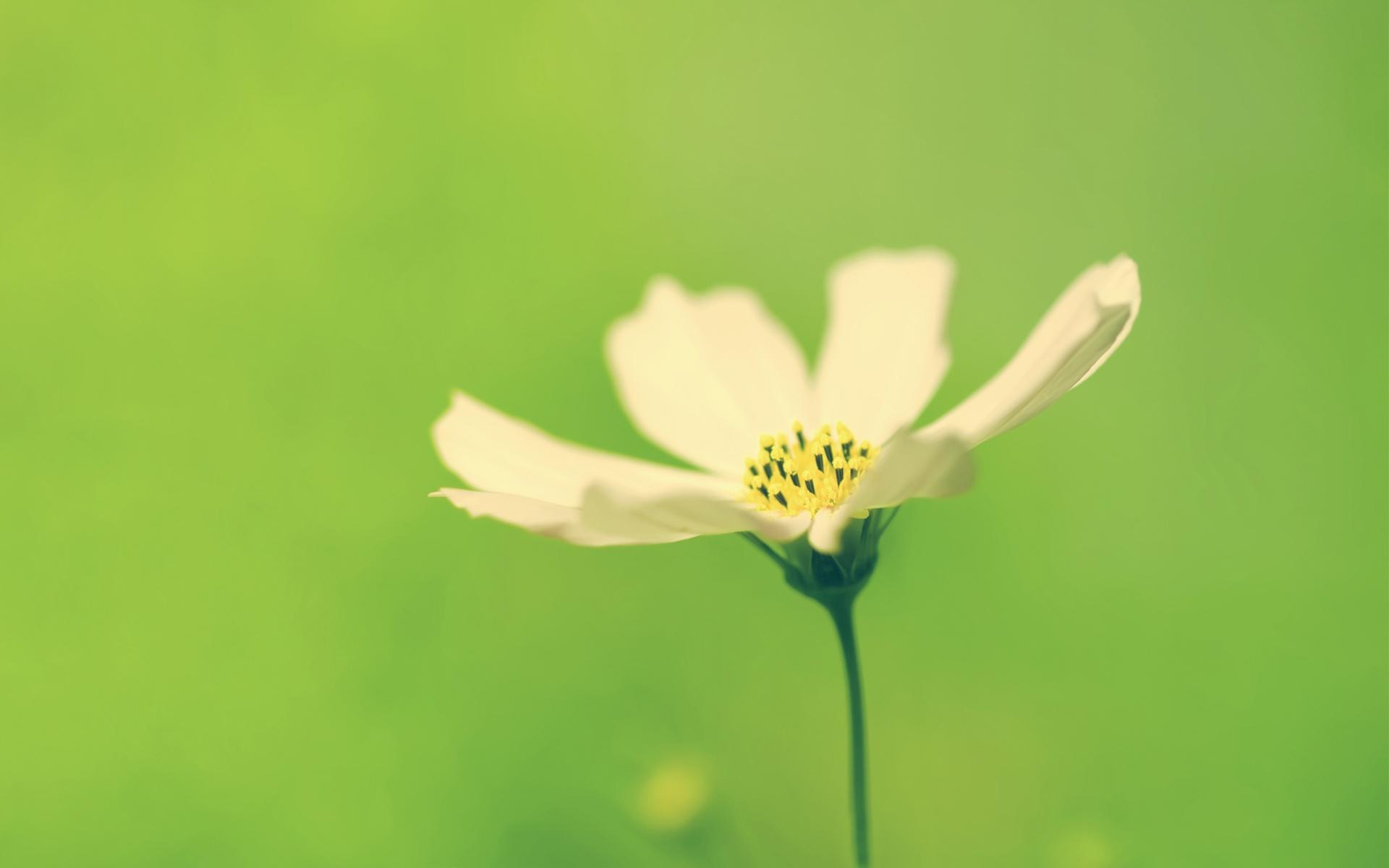 精美艺术设计拍摄风光风景植物宽屏壁纸 2011