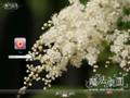 花穗XP仿win7桌面主题 XP版