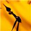 时间记录(TimeRecord) 4.24.27