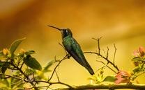 玲珑小巧的小鸟桌面壁纸