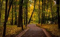 秋天的森林图片壁纸
