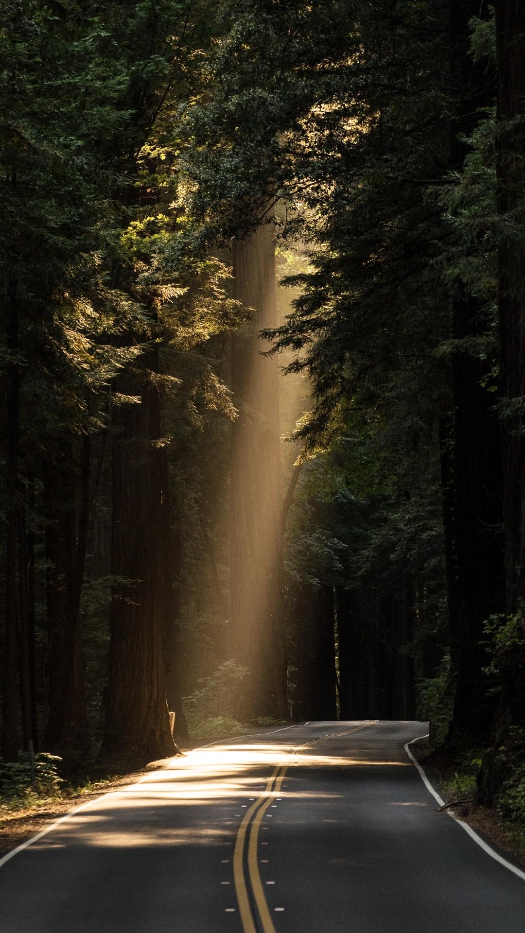 唯美宁静的林间小道图片壁纸2