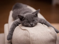精选可爱的灰色猫咪图片壁纸