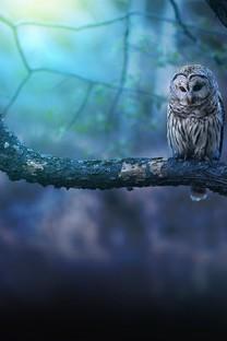 呆萌可爱的小猫头鹰图片壁纸