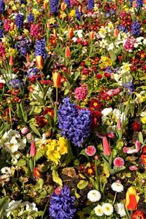 繁花似锦的唯美花朵图片壁纸