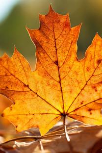 秋天的落叶手机壁纸图片