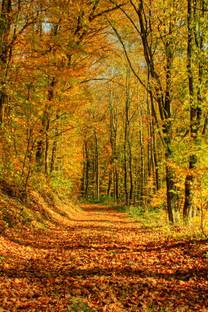 秋叶迷离高清手机壁纸