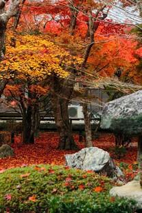 红叶庭院秋色手机壁纸