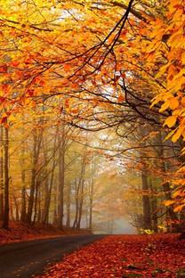 秋天林间小路手机壁纸图片