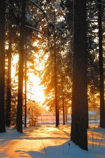 高清晰唯美深林风景图片壁纸
