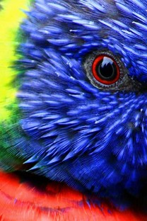 色彩鲜艳的各种动物图片壁纸