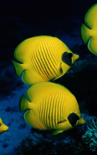 海底世界高清手机壁纸