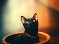 可爱猫咪头像图片壁纸