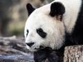 软萌可爱小动物图片壁纸