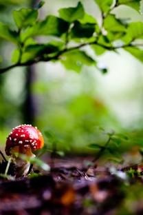 漂亮的野生蘑菇高清图片壁纸2