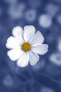 花朵系列小清新图片面壁纸合集包4