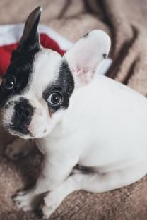 可爱小狗高清摄影桌面壁纸图片