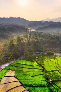 绿色农场全景鸟瞰图图片壁纸