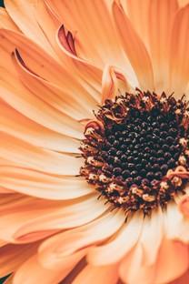 精美花朵特写高清图片壁纸