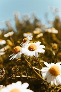 梦幻炫彩唯美花朵手机图片壁纸
