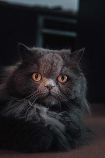 超萌可爱的猫咪手机图片壁纸