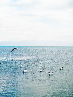 青海湖唯美图片桌面壁纸-海鸥