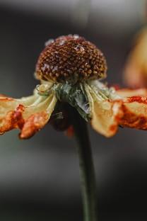 另类非主流风格植物图片壁纸2