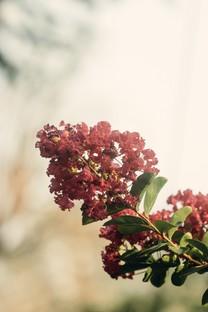 唯美小清新花朵图片壁纸