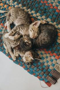 春日可爱猫咪图片壁纸2
