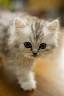 呆萌小猫图片壁纸