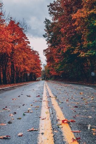 唯美秋叶背景图片壁纸