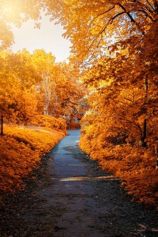 秋叶纷飞的唯美图片壁纸2