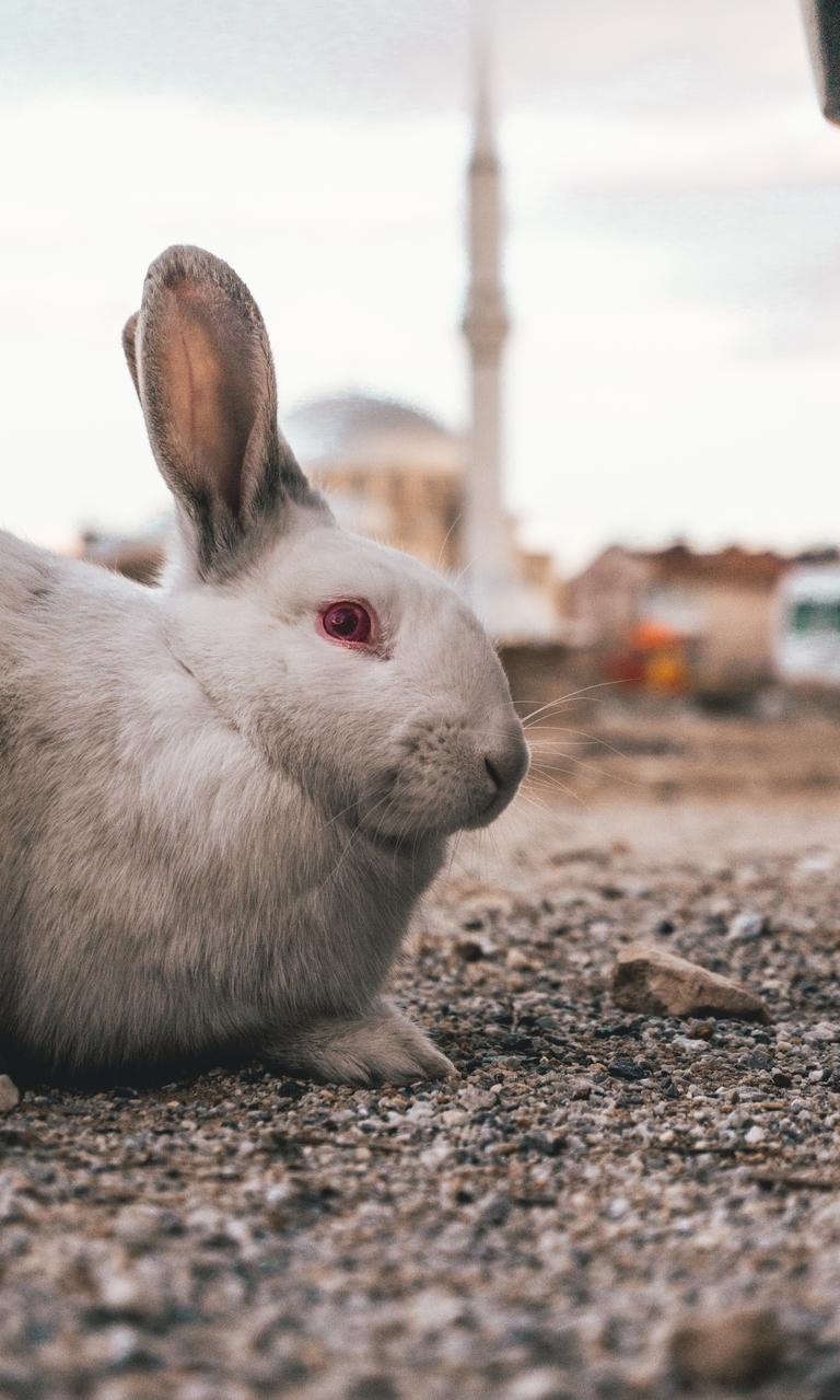 精选可爱兔子高清图片壁纸