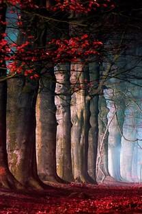 火红的秋天唯美深秋壁纸